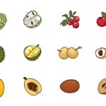 水果插画图标 V.8(AI,EPS,PNG,PSD)